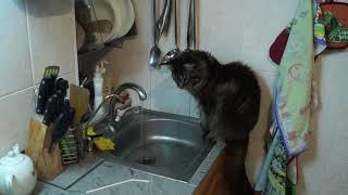 Кошка трубочка и вода
