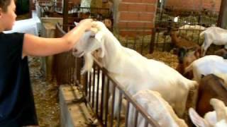 Visite chez les chèvres du LOT