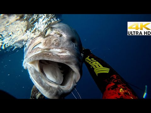 TOP 5 Best MOMENTS 2019 |Spearfishing Life 🇬🇷 [4K]✅
