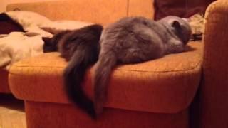 Спокойные коты, неспокойные хвосты