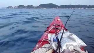 鎌倉カヤック釣りバカ日記ー5/31午前6時、材木座沖でカレイ、キスを連発.