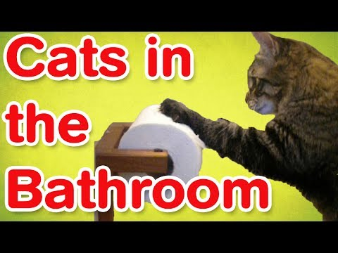 Cats In The Bathroom   Funny Cat Compilation