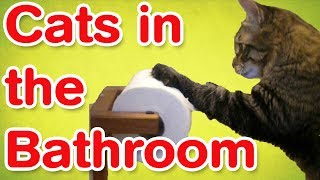 Cats In The Bathroom | Funny Cat Compilation