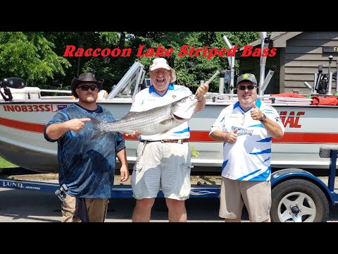 Striper Fishing, Monster Indiana Striped Bass Fishing & How To Fillet Fish