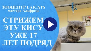 Стрижка кошек в 17 лет.
