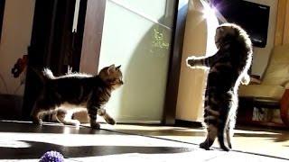 Cмешные видео про котят 25 - 2013-2014