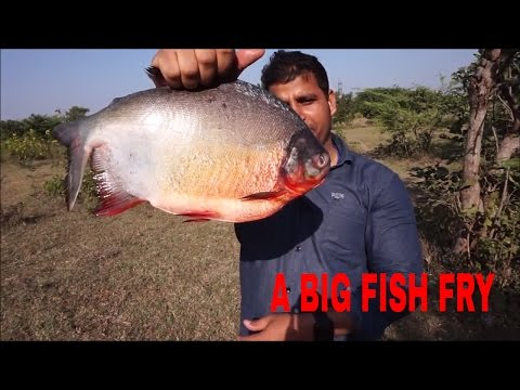 Fish Fry Recipe – Cooking Fish Fry In The Wild – Fish Fry Recipe Indian Style – Cooking Fish Recipes