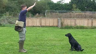 Gundog training: Drop (emergency stop)