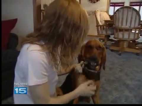 Teenage girl saves injured dog, gives up dream of a car