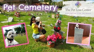Pet Cemetery: Visiting The Pet Loss Center with my Coton de Tulear I Lorentix