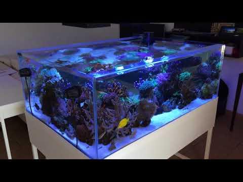 meerwasseraquarium einrichten neue fische ziehen ein doovi. Black Bedroom Furniture Sets. Home Design Ideas