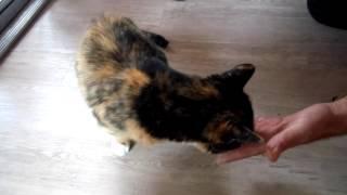 Teach an old cat new tricks