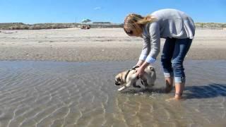 Pug Swimming Lessons