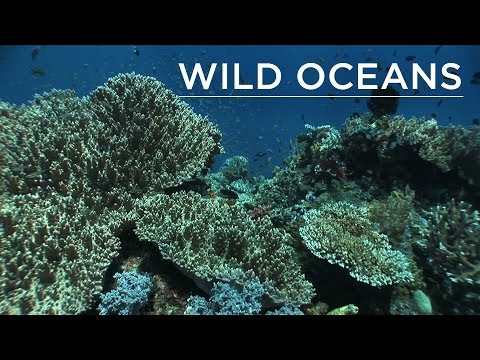 Welcome to the most pristine reefs on the planet