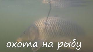 Осенний жор Сазана,Slingshot Fishing, Рыбалка с рогаткой
