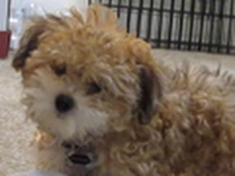 Cute Puppy Prank