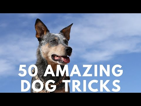 50 Amazing Dog Tricks