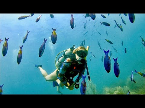 SCUBA DIVING With VENOMOUS FISH In Grenada!!