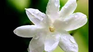 മുല്ലമലരിന്റെ സൗന്ദര്യവും സൗരഭവുമുള്ള ..mulla malarinte soundaryavum..