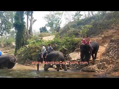 extraordinary-elephant-day-trip-via-bangkok-day-tours-(original-only-by-bangkokdaytours-ltd.!)