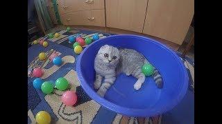 😻 Котенок Играет Разноцветными Шариками 🐱 Cat vs. Colorful Balls 🐱 Игры с Котенком Коты и Кошки