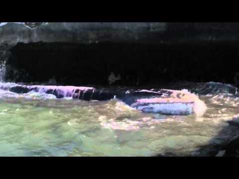 Baltimore Fin Whale last death roll