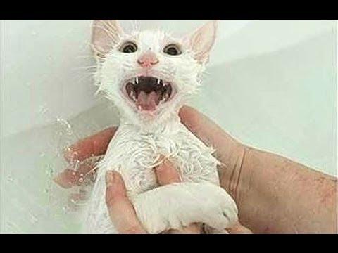 """Кошки """"говорят нет"""" Бани - Забавные Кошки в воде! Подборка!"""