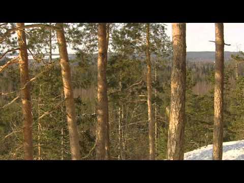 Finland wildlife - Wild Taiga forest