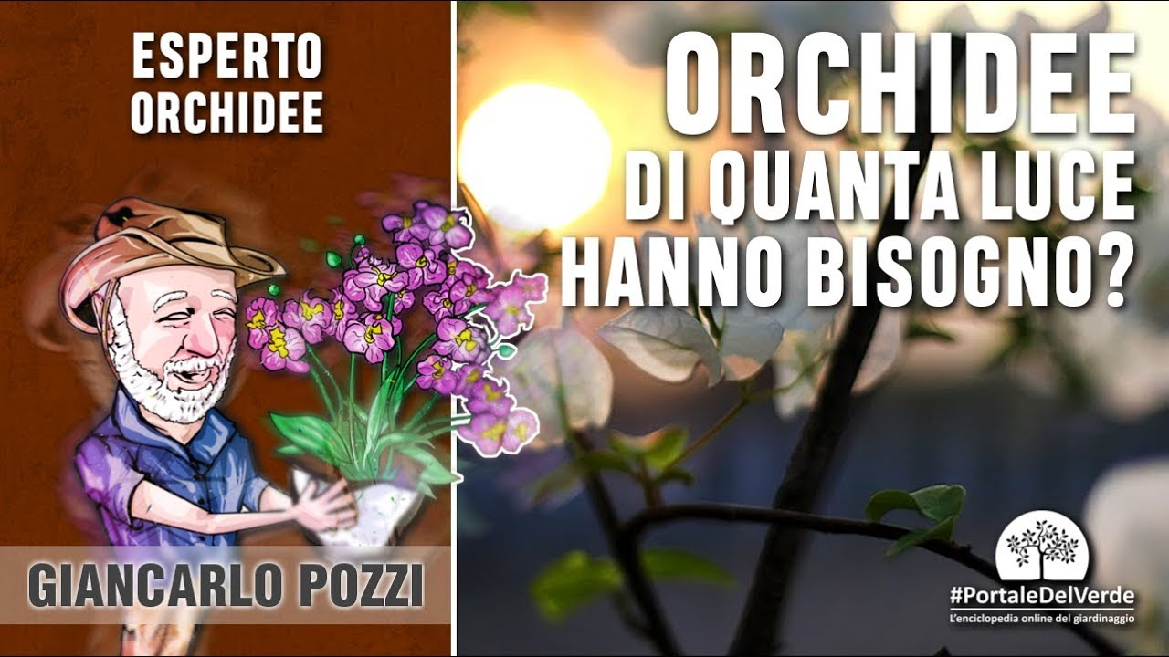 Quanta luce serve alle nostre orchidee? youtube