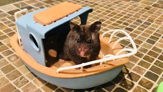 Funny HAMSTER Pet Playing In Toy Boat