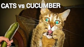 Cat Vs Cucumber Compilation - Funny Cats Scared Of Cucumbers #31