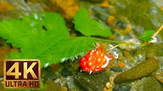 4K/UHD Nature Relax Video - Scenes of nature with relaxing sounds - WATER- Trailer 29