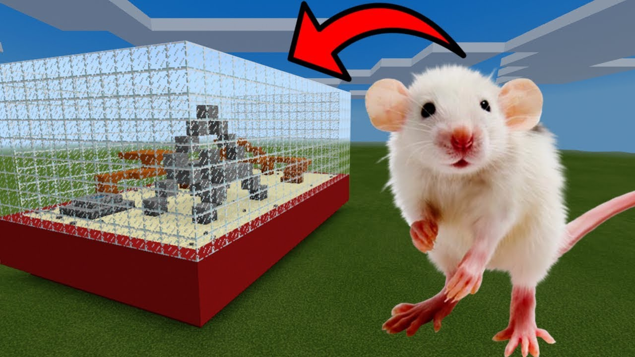 How To Make a MOUSE Farm in Minecraft PE