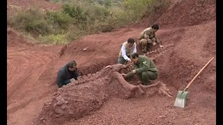 180 mln-year-old dinosaur fossils discovered in SW China