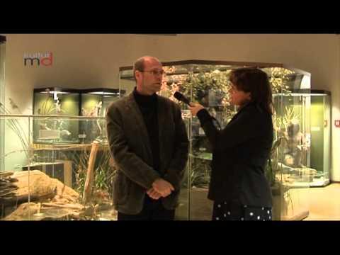 Museum für Naturkunde Magdeburg Ausstellung Lebensraum Elbe
