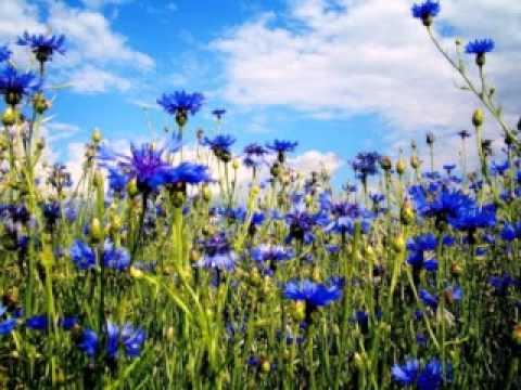 Скачать не рвите цветы караоке mp3 в качестве 320 кбит.
