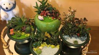 Мини сад. Моё маленькое цветочное хобби.Живой подарок,цветочные композиции. А вы любите цветы?