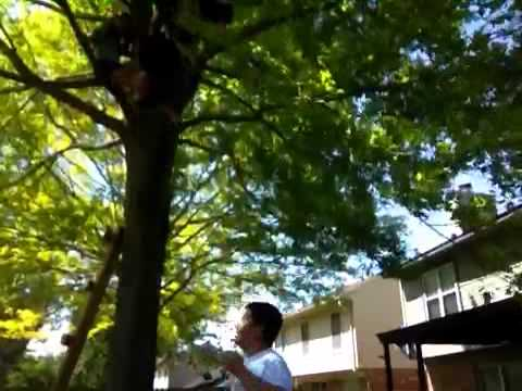 Tree jumping with cole dane and evan