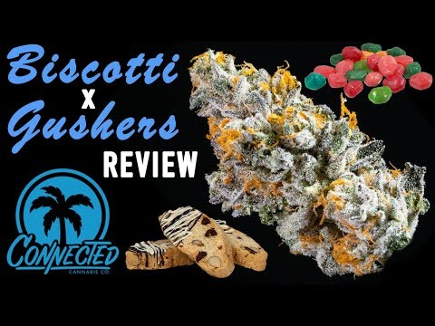 BISCOTTI x GUSHERS - Strain Review