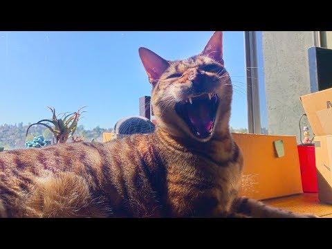 Autotuned Cat - Part 2