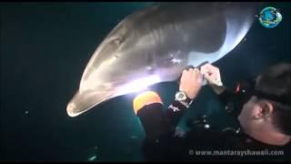 Golfinho pede ajuda ao mergulhador para tirar linha de pesca presa na barbatana
