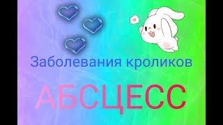 Абсцесс | Заболевания кроликов