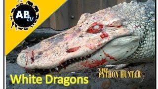 White Dragons : The Python Hunter : AnimalBytesTV