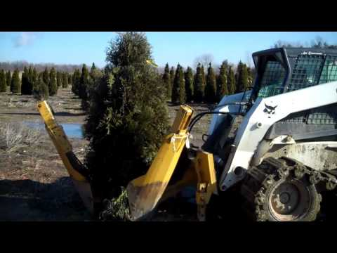 LCN Digging Thuja's and shipping in Feb.