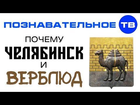 Почему называется ЧЕЛЯБИНСК и в гербе верблюд? (Познавательное ТВ, Артём Войтенков)