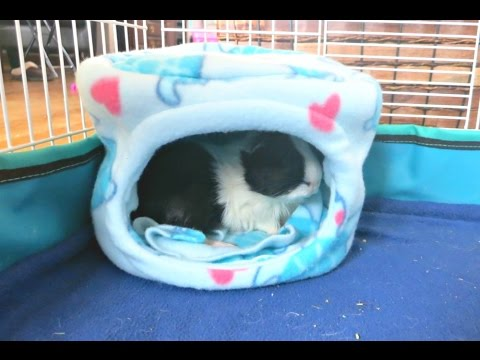How To Sew A Guinea Pig Bed