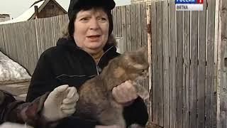 В Кирове и области началась выездная вакцинация животных против бешенства (ГТРК Вятка)