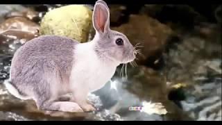 Развитие Ребенка Видео урок 21 для самых маленьких Лесные Животные