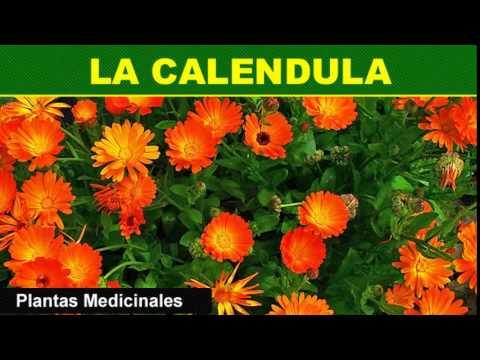 183 la calendula plantas medicinales youtube for Mezclas de plantas medicinales