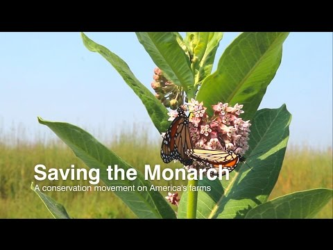 Saving the monarch: A conservation movement on America's farms